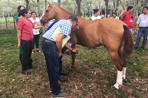 UK equine charities deliver training in Brazil